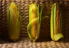 Sweet corn on cobs . Fresh sweet corn on cobs . Healthy organic food Stock Photo