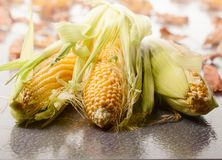 Fresh sweet corn on cobs . Sweet corn on cobs. Healthy organic food Stock Image