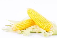 Sweet corn on cobs kernels or fresh grains of ripe corn on white background corn vegetable  Royalty Free Stock Photos