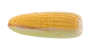 Sweet corn on cobs kernels or grains of ripe corn isolated on wh Stock Image