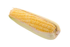 Sweet corn on cobs kernels or grains of ripe corn isolated on wh Royalty Free Stock Photography