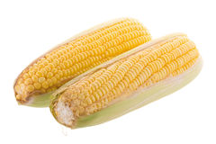 Sweet corn on cobs kernels or grains of ripe corn isolated on wh Royalty Free Stock Photo