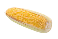 Sweet corn on cobs kernels or grains of ripe corn isolated on wh Royalty Free Stock Image