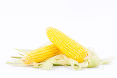 Sweet corn on cobs kernels or grains of ripe corn on white background corn vegetable isolated Royalty Free Stock Photo