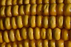 Sweet Corn, Corn Kernels, Maize, Food stock image