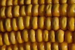 Sweet Corn, Corn Kernels, Maize, Food royalty free stock photography