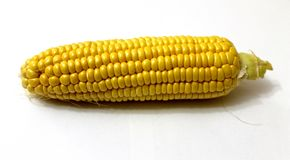 Sweet Corn. Corn on a white background royalty free stock photo