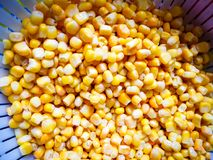 Sweet corn in cullender drained. Sweet corn in cullender, washed and drained before the next step Stock Image