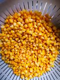 Sweet corn in cullender drained. Sweet corn in cullender, washed and drained before the next step Stock Photo