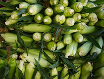 Sweet corn on display at the farmer's market Royalty Free Stock Photos