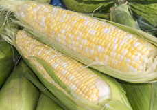 Sweet Corn. Ears of sweet yellow and white corn Stock Photography