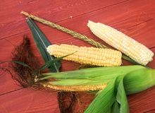 Sweet corn Royalty Free Stock Photography