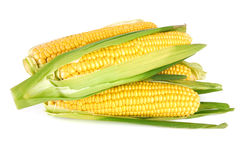 Sweet corn. Isolated on a white background royalty free stock images