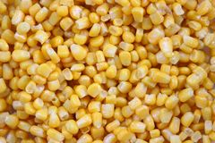 Sweet corn kernels Stock Photos