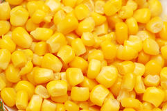 Sweet corn kernels arranged Royalty Free Stock Photo