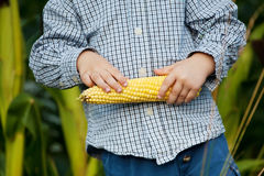 Sweet corn in little boys hands Stock Photography