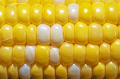 Sweet corn macro Stock Images