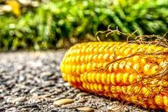 Sweet Corn, Maize, Corn On The Cob, Vegetarian Food stock photo