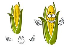 Sweet corn or maize vegetable character. Sweet corn or maize vegetable cartoon character isolated on white for agriculture or food design Stock Photography