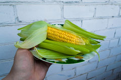Sweet corn on a plate. Corn on a plate Royalty Free Stock Photos