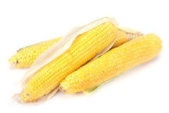 Sweet corn ripe Royalty Free Stock Image