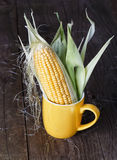 Sweet corn on rustic wooden background Stock Images