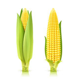 Sweet Corn Set Royalty Free Stock Image