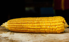 Sweet corn with some ears partially husked. Stock Images
