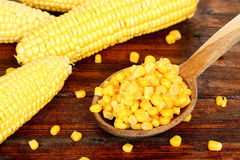 Sweet corn on table Stock Images