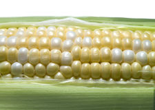 Sweet corn. On white background Stock Images