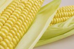Sweet corn. On white background - macro Royalty Free Stock Photography