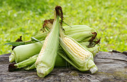 Sweet corn Stock Images