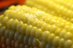 Sweet corn. Royalty Free Stock Photos