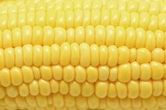 Sweet corns as food background. Closeup of  sweet corns as food background Royalty Free Stock Image