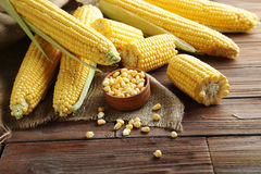 Sweet corns Stock Images