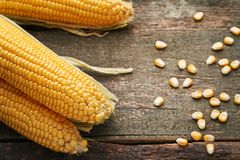 Sweet corns. On grey wooden table Stock Photos