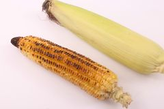 Grilled sweet corn stock image