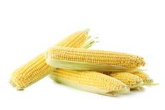 Sweet corns Royalty Free Stock Image