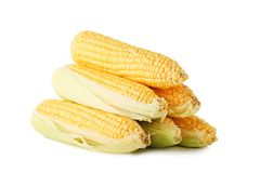 Sweet corns. Isolated on white Royalty Free Stock Photo