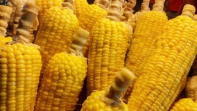 Sweet corns Royalty Free Stock Photos