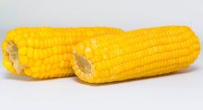 2 sweet corns. On white board Royalty Free Stock Photos