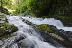 Sweet Creek Royalty Free Stock Images