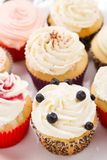 Sweet cupcakes Stock Images