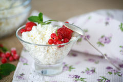 Sweet curd with berries Stock Images