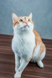 Sweet cute cat in home Stock Photos