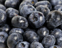 Sweet details of blueberry. Picture with sweet blackberry details Royalty Free Stock Image