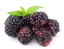 Sweet dewberry Royalty Free Stock Photography