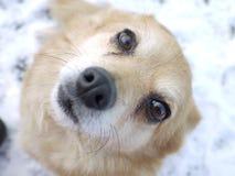 Sweet Dog. Close up of mix breed dog Stock Photo
