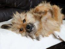 Sweet dog Stock Images