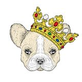 A sweet dog in a beautiful golden crown. Purebred puppy. Vector illustration for a postcard or a poster, print on clothes. Fashion and style, accessories Stock Photos